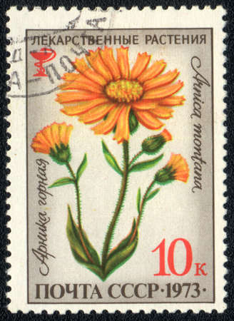 USSR - CIRCA 1973: A stamp printed in USSR  shows  a  Arnica montana, herb series, circa 1973 photo