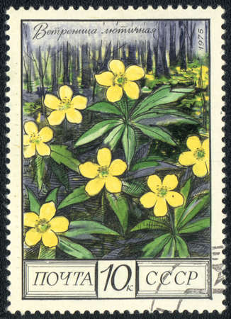 philatelic: USSR - CIRCA 1975: A stamp printed in USSR  shows  a  Anemone ranunculoides, herb series, circa 1975 Stock Photo