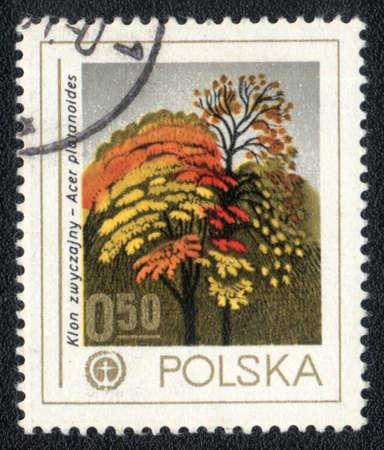 acer platanoides: POLAND - CIRCA 1980: A stamp printed in POLAND  shows  a Acer platanoides, series, circa 1980