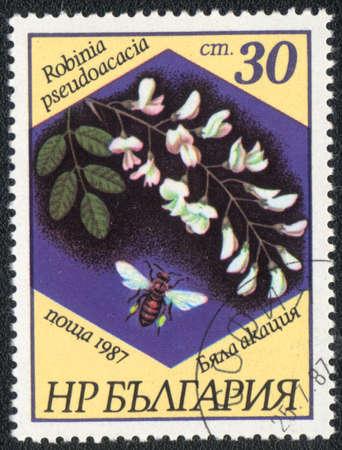 BULGARIA - CIRCA 1987: A stamp printed in BULGARIA   shows  a Robinia pseudoacacia, series, circa 1987 photo