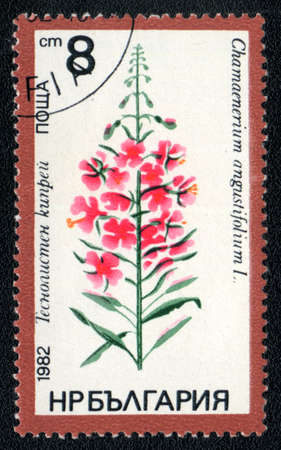 philatelic: BULGARIA - CIRCA 1982: A stamp printed in BULGARIA   shows  a Chamaenerium angustifolium, series, circa 1982