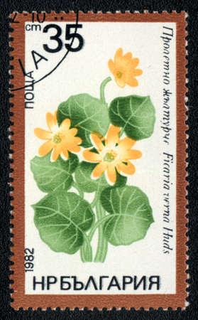 BULGARIA - CIRCA 1982: A stamp printed in BULGARIA   shows  a Ficaria verna Huds, series, circa 1982 photo