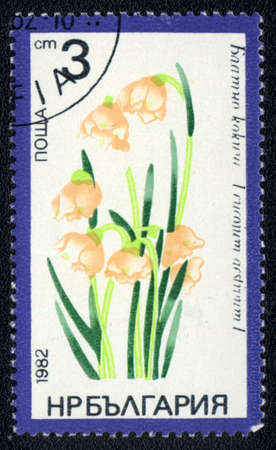 BULGARIA - CIRCA 1982: A stamp printed in BULGARIA   shows  a Leucojum aestivum, series, circa 1982 photo