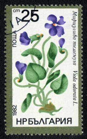 philatelic: BULGARIA - CIRCA 1982: A stamp printed in BULGARIA   shows  a Viola odorata, series, circa 1982