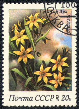 philatelic: USSR - CIRCA 1983: A stamp printed in USSR  shows  a Gagea lutea, series, circa 1983
