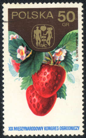 philatelic: POLAND - CIRCA 1974: A stamp printed in POLAND  shows  a Strawberries, series,XIX International congress of truck farming, circa 1974