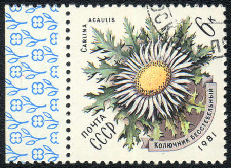 USSR - CIRCA 1981: A stamp printed in USSR  shows  a Carlina acaulis, series, circa 1981 photo