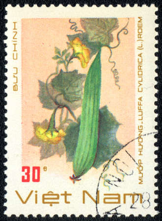 cylindrica: VIETNAM - CIRCA 1989: A stamp printed in VIETNAM shows  a Luffa cylindrica, series, circa 1989 Stock Photo