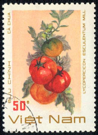 VIETNAM - CIRCA 1989: A stamp printed in VIETNAM shows  a Lycopercicon esculentum, series, circa 1989 photo