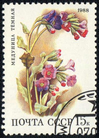 USSR - CIRCA 1988: A stamp printed in USSR  shows  a Pulmonaria obscura, series, circa 1988 Stock Photo - 10868611