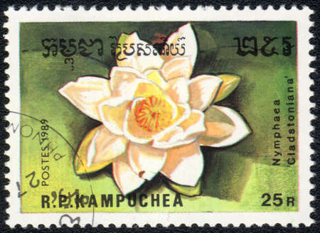 perforated stamp: Kampuchea - CIRCA 1989: A stamp printed in Kampuchea  shows  a Nymphaea Cladstoniana, series Water lily, circa 1989