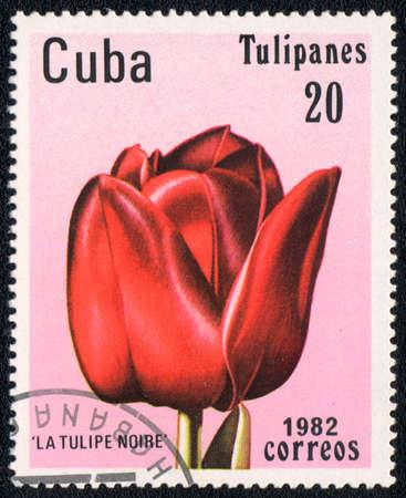 noire: CUBA - CIRCA 1982: A stamp printed in CUBA  shows  a La tulipe noire, series Tulipanes, circa 1982