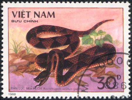 amphibia: VIETNAM - CIRCA 1988: A stamp printed in VIETNAM  shows  a Ancistrodon acutus  gunther, series, circa 1988 Stock Photo