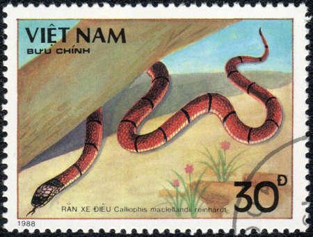 VIETNAM - CIRCA 1988: A stamp printed in VIETNAM  shows  a Calliophis maclellandii reinhardt, series, circa 1988 photo