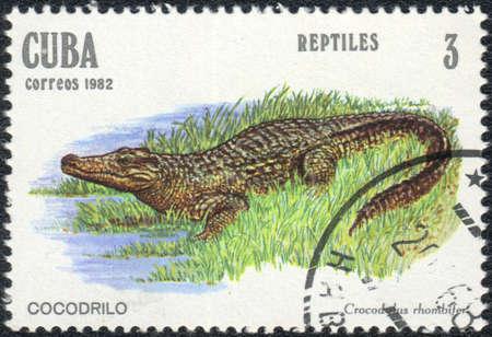 amphibia: CUBA - CIRCA 1982: A stamp printed in CUBA  shows  a Crocodylus rhombifer - Cocodrilo, series Reptilas, circa 1982