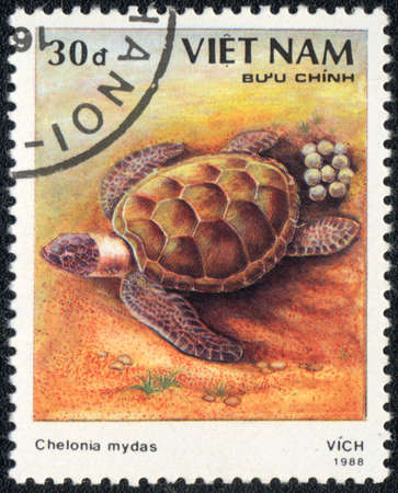 VIETNAM - CIRCA 1988: A stamp printed in VIETNAM  shows  a Green sea turtle - Chelonia mydas, series, circa 1988 photo