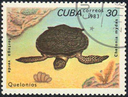 amphibia: CUBA - CIRCA 1983: A stamp printed in CUBA  shows  a Green sea turtle - tortuga verde, series Quelonios, circa 1983