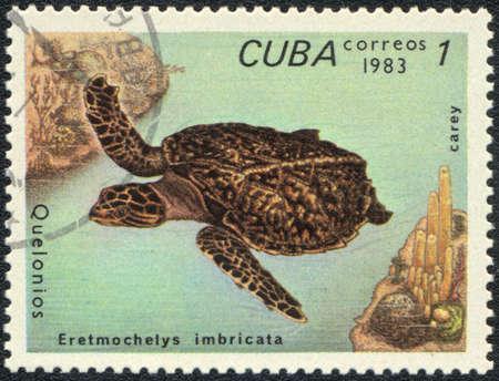 CUBA - CIRCA 1983: A stamp printed in CUBA  shows  a  Eretmochelys imbricata - carey, series Quelonios, circa 1983