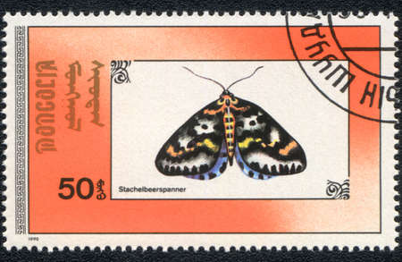 MONGOLIA - CIRCA 1990: A stamp printed in MONGOLIA  shows  a Abraxas grossulariata (Stachelbeerspanner), butterfly series, circa 1990 photo