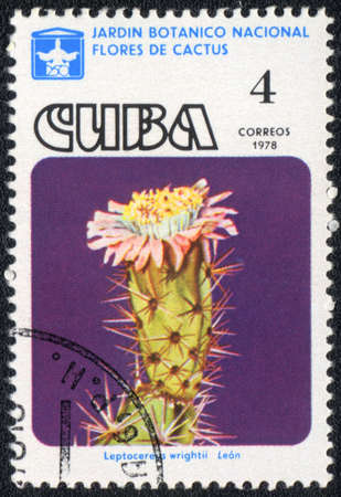 CUBA - CIRCA 1978: A stamp printed in CUBA  shows  a cactus - Leptocereus wrightii, series