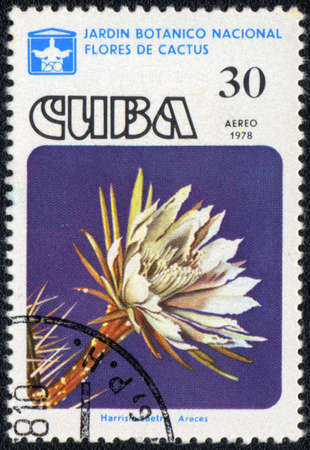 CUBA - CIRCA 1978: A stamp printed in CUBA  shows  a cactus - Harrisia taetro Areces, series