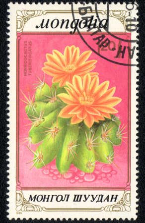 MONGOLIA - CIRCA 1989: A stamp printed in MONGOLIA  shows  a Horridocactus tuberculatus, series 'CACTUS', circa 1989 photo