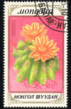 MONGOLIA - CIRCA 1989: A stamp printed in MONGOLIA  shows  a Horridocactus tuberculatus, series