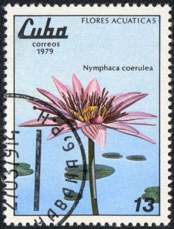 CUBA - CIRCA 1979: A stamp printed in CUBA  shows  a  Nymphaea  caerulea, series
