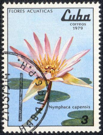 CUBA - CIRCA 1979: A stamp printed in CUBA  shows  a  Nymphaea capensis, series