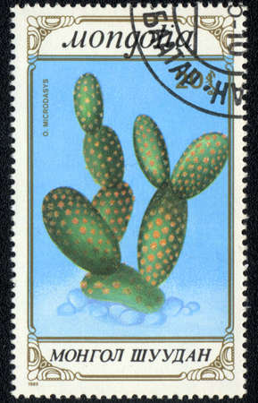 microdasys: MONGOLIA - CIRCA 1989: A stamp printed in MONGOLIA  shows  a Opuntia microdasys, series CACTUS, circa 1989 Stock Photo