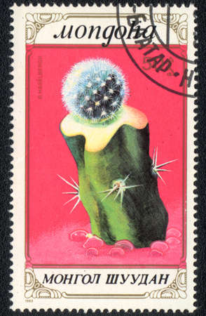MONGOLIA - CIRCA 1989: A stamp printed in MONGOLIA  shows  a Parodia Haselbergii, series
