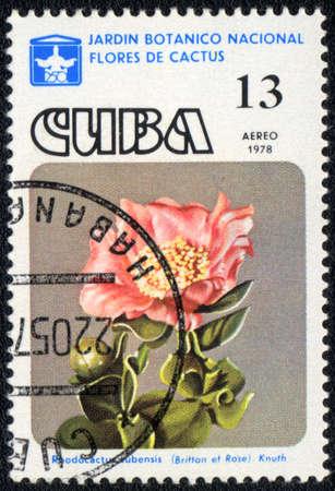 CUBA - CIRCA 1978: A stamp printed in CUBA  shows  a cactus - Rhodocactus cubensis, series