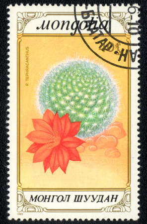 MONGOLIA - CIRCA 1989: A stamp printed in MONGOLIA  shows  a Roseocereus tephracanthus, series