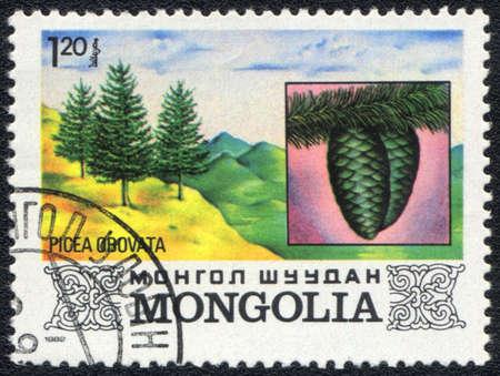 picea: MONGOLIA - CIRCA 1982: A stamp printed in MONGOLIA  shows  a  Picea obovata, series, circa 1982