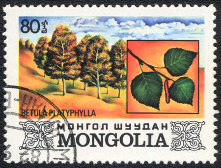 betula: MONGOLIA - CIRCA 1982: A stamp printed in MONGOLIA  shows  a  Betula platyphylla, series, circa 1982 Stock Photo