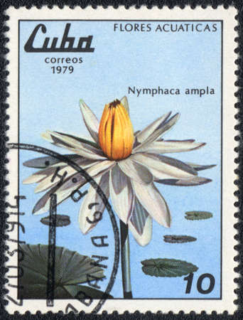 CUBA - CIRCA 1979: A stamp printed in CUBA  shows  a  Nymphaea ampla, series 'Flores Acuaticas', circa 1979 photo