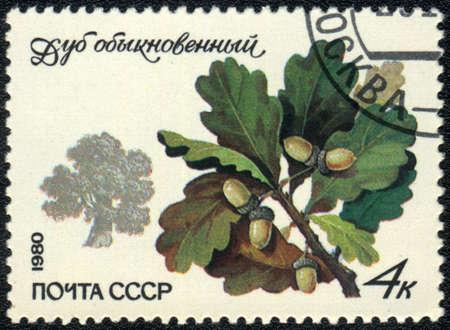 USSR - CIRCA 1980: A stamp printed in USSR  shows  a Quercus robur, series, circa 1980  photo