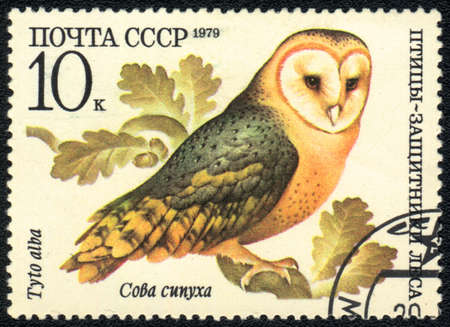 USSR - CIRCA 1979: A stamp printed in USSR  shows  a Tyto alba, series Birds - the defenders of the forest, circa 1979 photo