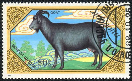 postage stamp: MONGOLIA - CIRCA 1988: A Stamp printed in MONGOLIA shows black doe goat,  Goats series, circa 1988