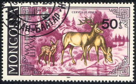 MONGOLIA - CIRCA 1984: A Stamp printed in MONGOLIA shows Deer watering place(Cervus elaphus),  series, circa 1984  photo