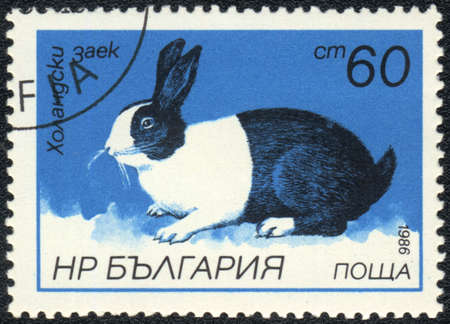 BULGARIA - CIRCA 1986: A Stamp printed in BULGARIA shows Dutch Rabbit,  Rabbits breeds  series, circa 1986  photo
