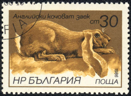 BULGARIA - CIRCA 1986: A Stamp printed in BULGARIA shows English lop-eared rabbit, Rabbits breeds   series, circa 1986  photo