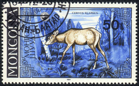 MONGOLIA - CIRCA 1984: A Stamp printed in MONGOLIA shows image female deer (Cervus elaphus),  series, circa 1984  photo