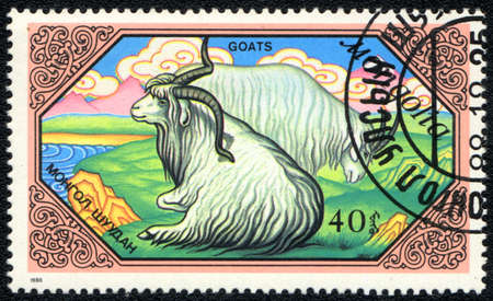 MONGOLIA - CIRCA 1988: A Stamp printed in MONGOLIA shows long-haired white goats,  Goats series, circa 1988  photo