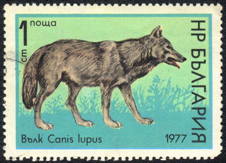 anis: BULGARIA - CIRCA 1977: A stamp printed in BULGARIA shows anis lupus, circa 1977 Stock Photo