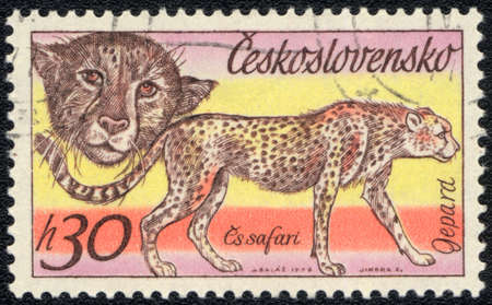 CZECHOSLOVAKIA - CIRCA 1976: A stamp printed in CZECHOSLOVAKIA  shows Cheetah, series, circa 1976 photo