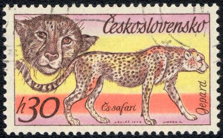 CZECHOSLOVAKIA - CIRCA 1976: A stamp printed in CZECHOSLOVAKIA  shows Cheetah, series, circa 1976 Stock Photo - 13324334
