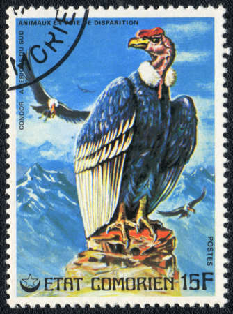 COMOROS - CIRCA 1980: A stamp printed in COMOROS shows  Condor, series, circa 1980 photo