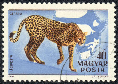 HUNGARY - CIRCA 1981: A stamp printed in HUNGARY shows  a Acinonyx jubatus, Africa series, circa 1981 photo