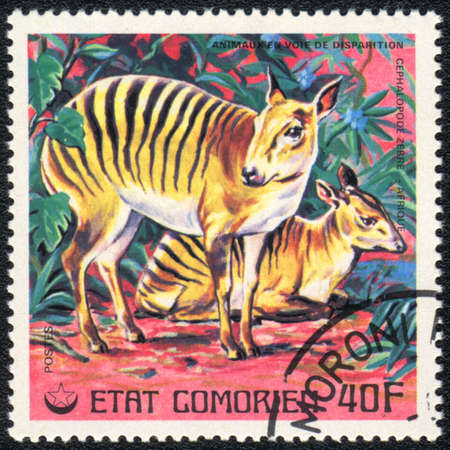 comores: COMOROS - CIRCA 1980: A stamp printed in COMOROS shows  a African bongo , series, circa 1980